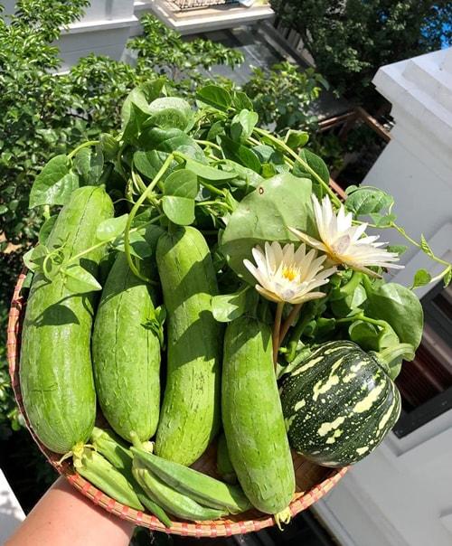 Vườn trồng rau trên sân thượng
